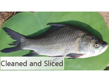 catla fish sliced