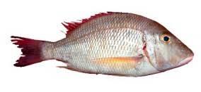 Emperior Fish
