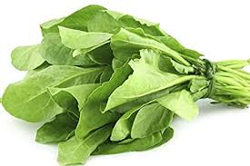 Spinach Palak leaves