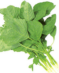 Amaranthus Green Leaves