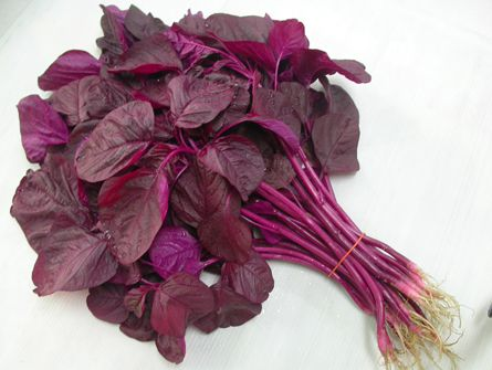 amaranthus red Leaves