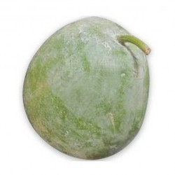 Ash Gourd Organically Grown