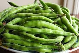 Broad Beans Organically Grown
