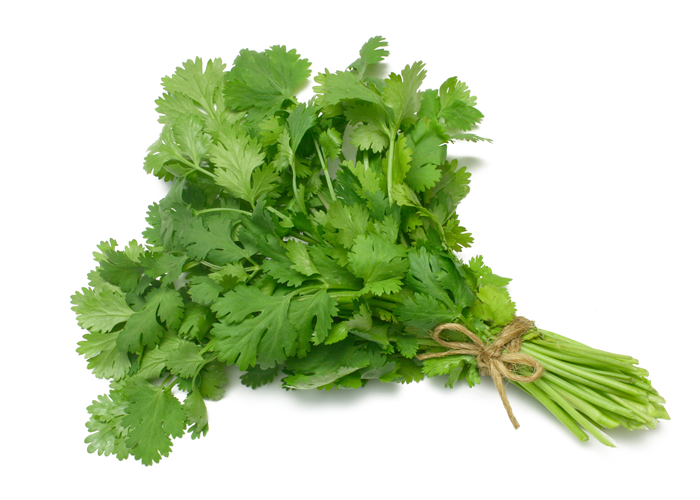 Coriander Leaves Cut