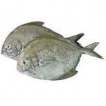 black Pomfret Whole Cleaned Net Weight